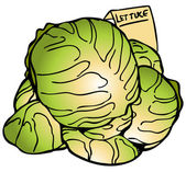 Lettuce Heads — Stockvector