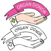 Organ Donor — Stock Vector