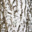 Bark covered in snow — Stock Photo