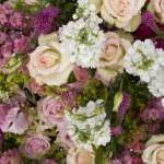 Garden flowers — Stock Photo #4042475
