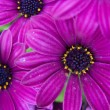 Close up of flower head — Stock Photo