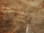 Starý strom — Stock fotografie