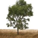 Single tree — Stock Photo #4053419
