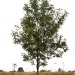 Single tree — Stock Photo #4053478
