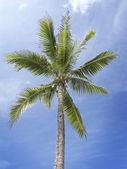 Coconut tree — Zdjęcie stockowe