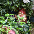 Stock Photo: Garden Gnome