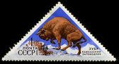 URSS intorno al 1973: sul timbro raffigurato un bisonte di montagna, intorno al 1973