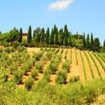 thumbnail of Hill Of Tuscany