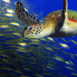 thumbnail of Green turtle