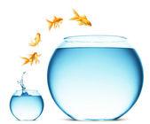 Goldfish springen aus der wasser