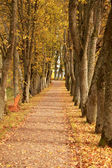 Autumn wayside trees