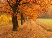 Podzimní den v parku