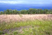 Tallgrass prairie pozůstatek a dramatická obloha na jaře