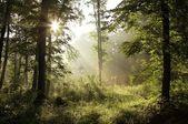 Morning sunlight falls into misty forest