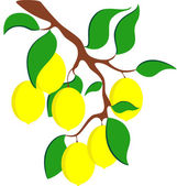 Illustration of a ripe lemons on the branch isolated