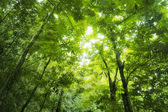 Wald-Sonnenlicht