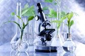 Zelené sazenice a mikroskop v laboratoři
