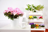 Flowers in interior