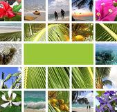 Rest in tropics. Collage