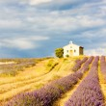 thumbnail of Provence, France