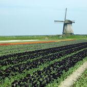 Větrný mlýn, Nizozemsko