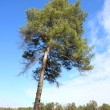 thumbnail of Alone tree on field in the forest