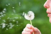 Allergia-szezon