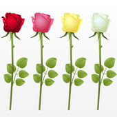 Set from four roses on a white background