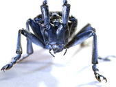Makro hmyzu dlouhý roh brouk