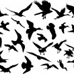 thumbnail of Vector flying birds