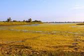 Salt marsh covered with water plants (II)