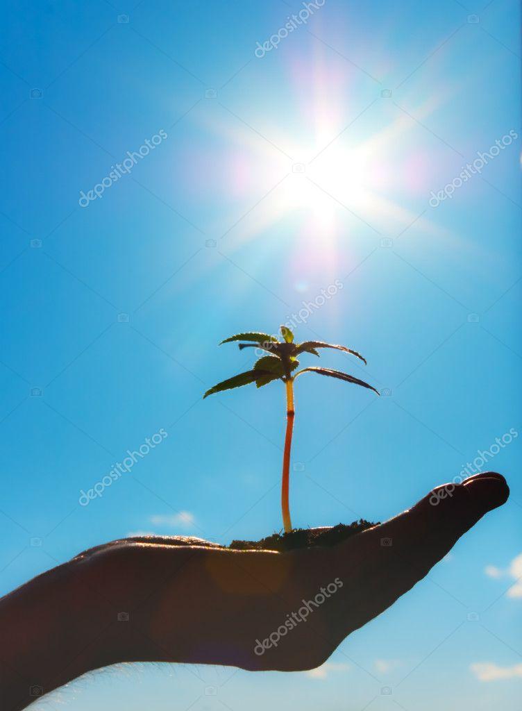 Growth metaphor