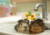 Lustige Tiere im Pool