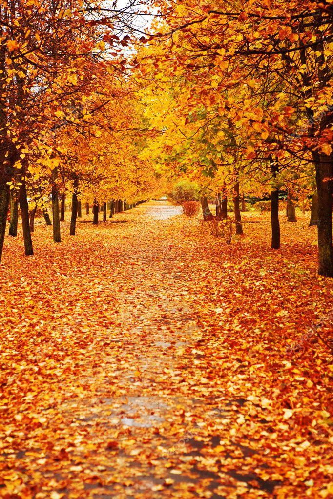 Orange autumn alley
