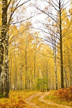 Forest autumn closeup