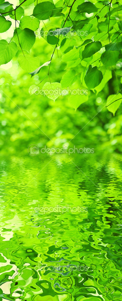 Green leaves an water