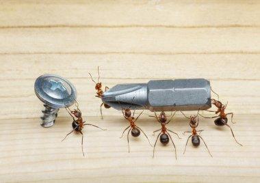 Team of ants carries screwdriver to screw, teamwork