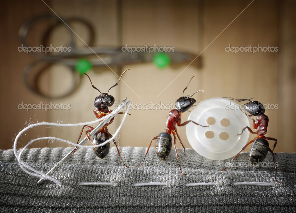 Tailor ant and team of ants sewing wear