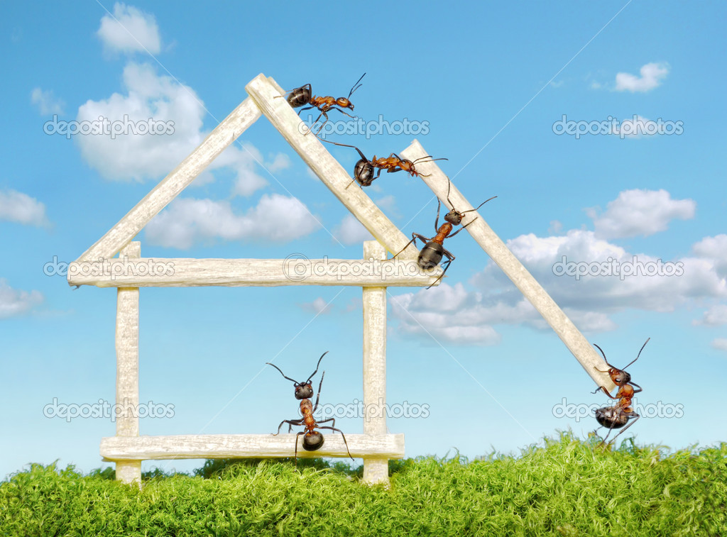 Team of ants constructing wooden house