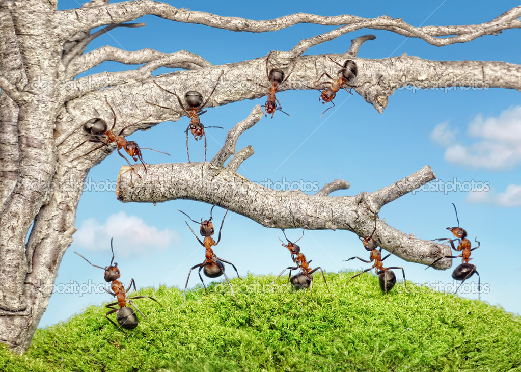 Team of ants taking branch from old tree