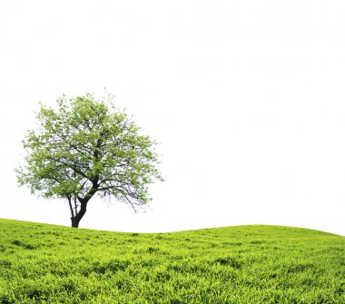 Tree with green leaves isolated on white background stock vector