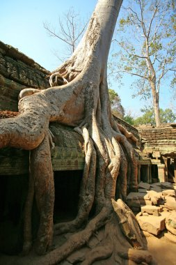 Cambodia's Ta Prohm in Angkor Wat