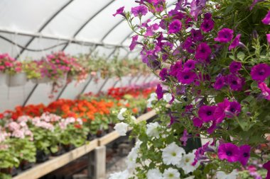 Down the greenhouse