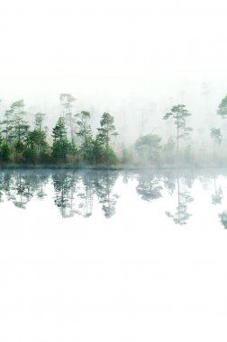 Morning in taiga forest