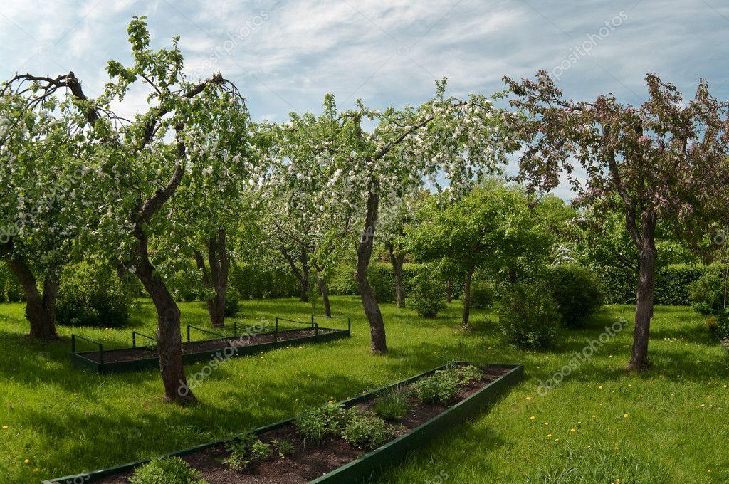 Bomen In Tuin : Apple bomen tuin in het voorjaar u2014 stockfoto © antiksu #3257001