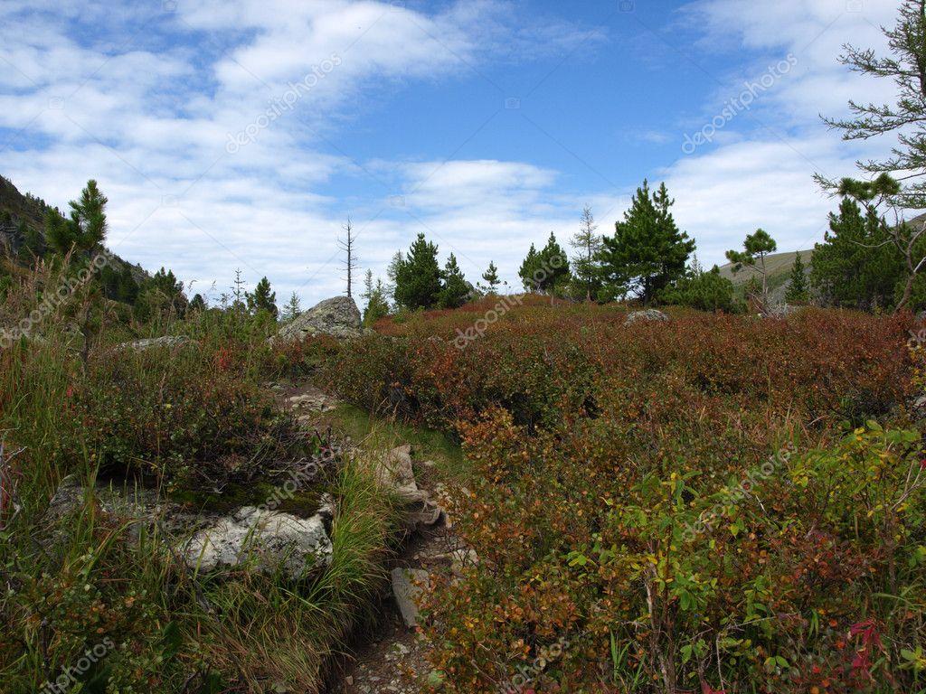 Rich vegetation