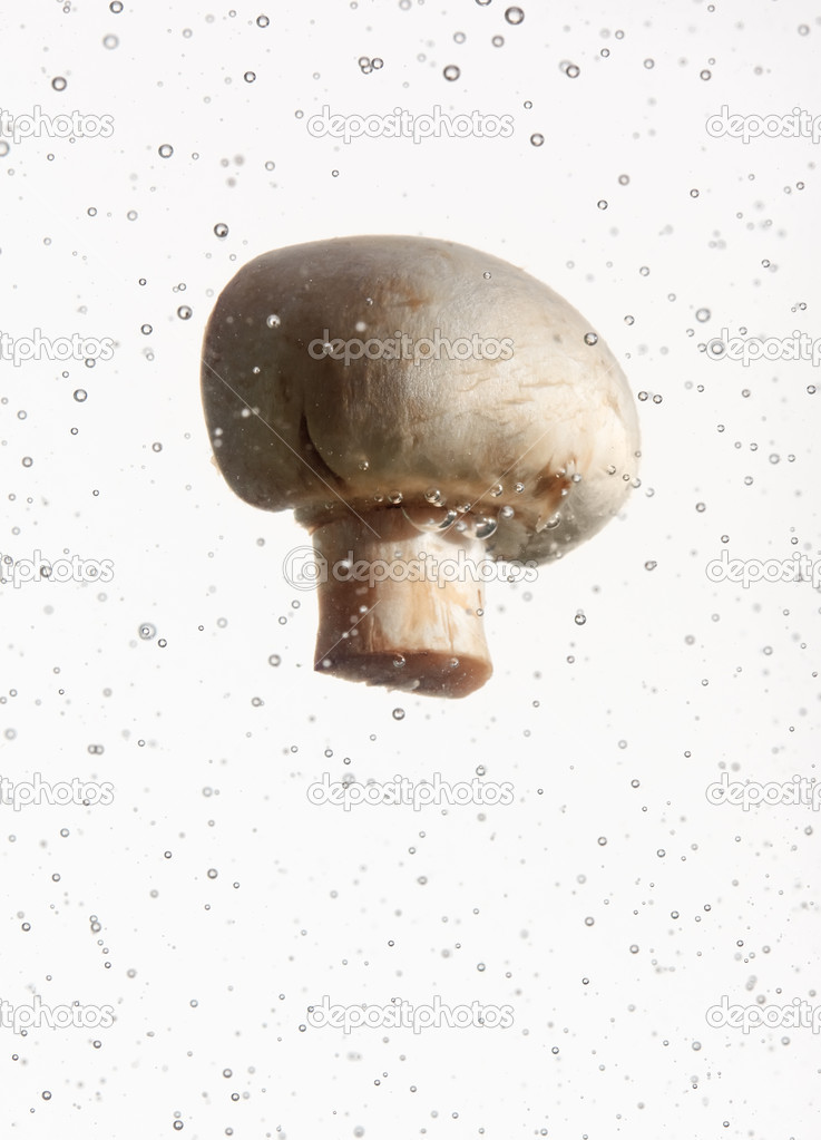 Field mushroom in water with air bubbles