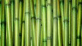 čerstvý bambus pozadí