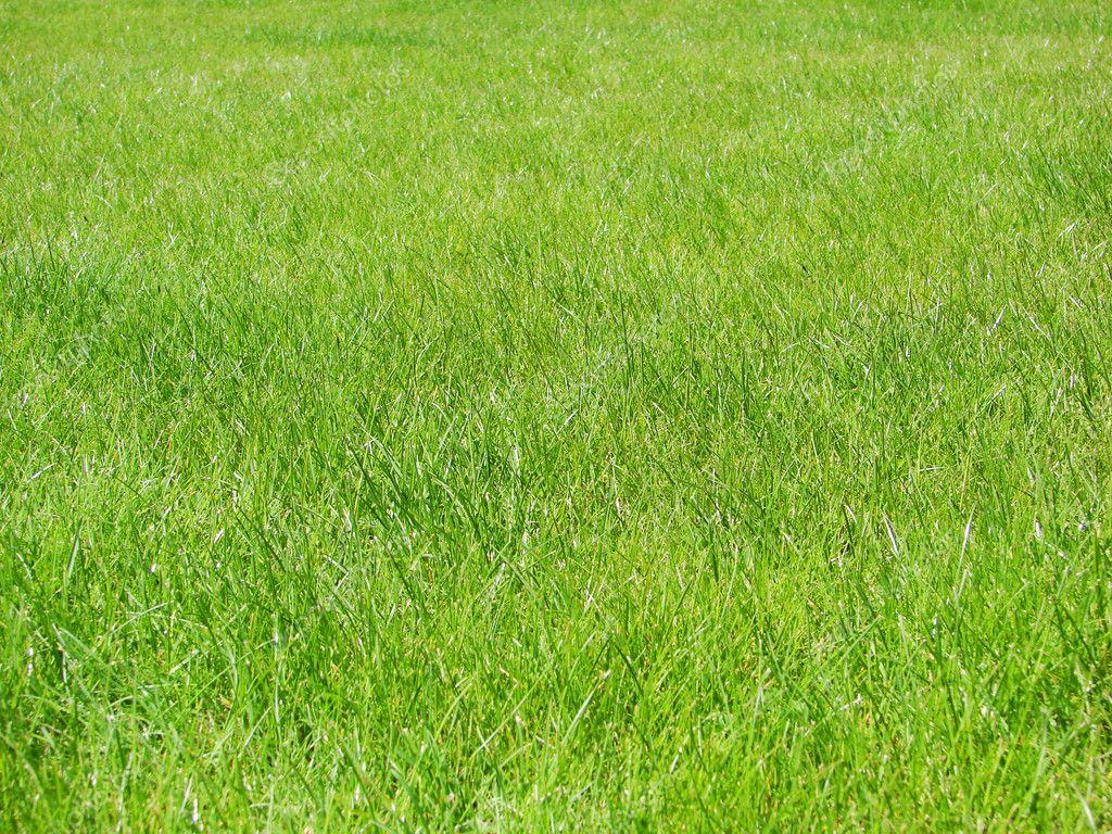 Pelouse de fond vert photographie ale ks 3458454 for Prix de pelouse