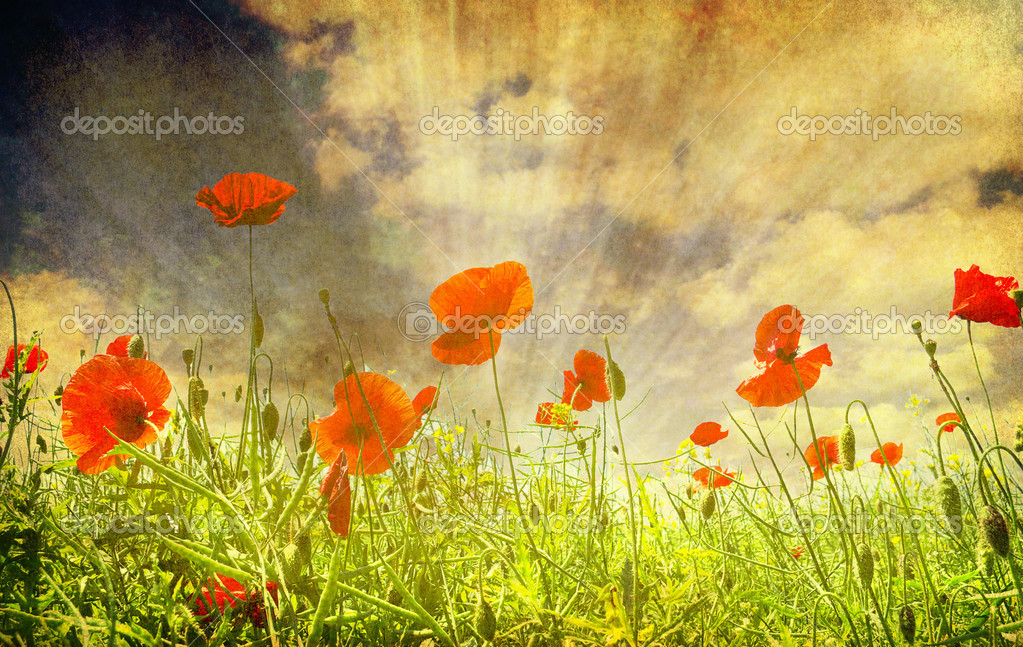 Grunge poppies background